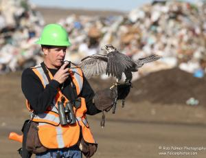 Anna Landfill IV